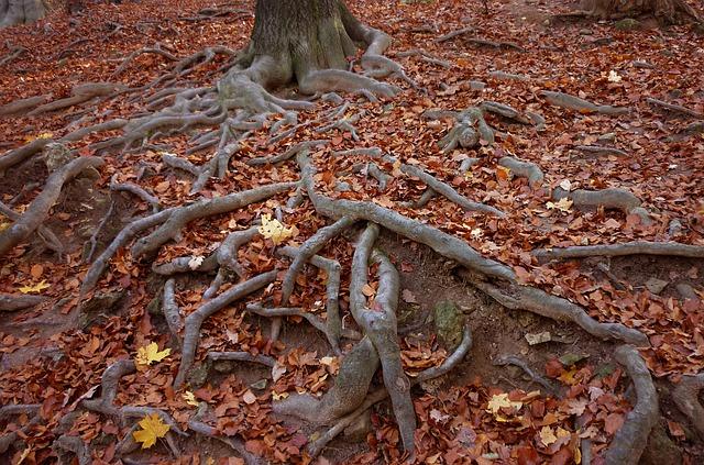 Mula Bandha - The Root Lock in Yoga
